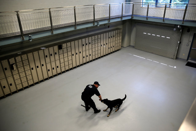 """Metropolitan Transit Authority (MTA) Police Officer Keith Flood trains with his K-9 partner Doc, a German Shepherd, inside the """"warehouse room"""" at the new MTA Police Department Canine Training Center in Stormville, New York, U.S., June 6, 2016. (Photo by Mike Segar/Reuters)"""