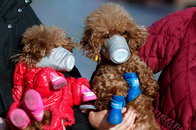 Dogs wearing masks are seen at a main shopping area, in downtown Shanghai, China, as the country is hit by an outbreak of a new coronavirus, February 16, 2020. (Photo by Aly Song/Reuters)