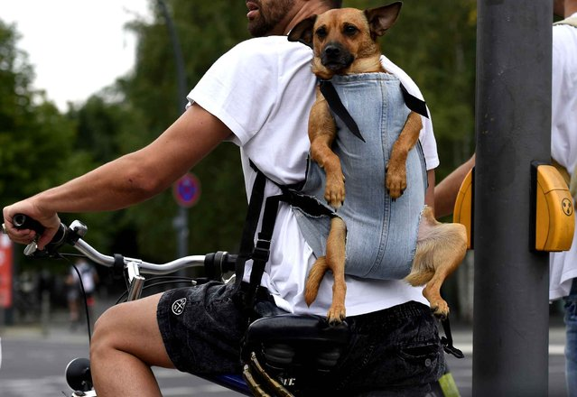 A cyclist carries a dog on his back in Berlin's Tiergarten district on August 7, 2014. (Photo by Tobias Schwarz/AFP Photo)
