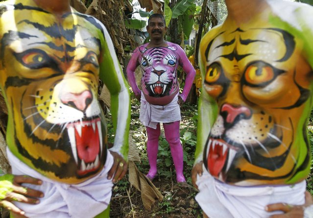 Dancers painted to look like tigers pose as they wait to take part in a performance during festivities marking the end of the annual harvest festival of Onam in Trichur city in the southern Indian state of Kerala September 10, 2014. (Photo by Reuters/Babu)