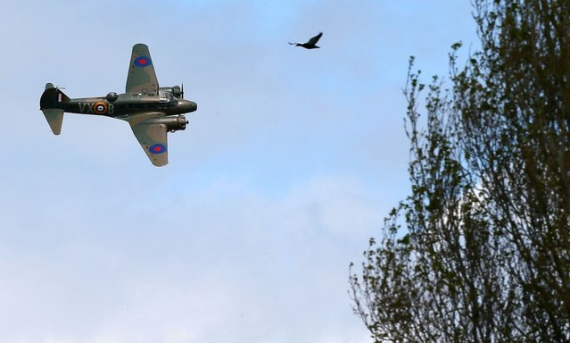 A vintage plane performs during an airshow commemorating the completion of the rebuild of Havilland Mosquito KA 114, on September 29, 2012 in Ardmore, New Zealand. The plane was restored by Warbird Restorations at Ardmore Aerodrome and is the only flying Mosquito in the world.  (Photo by Simon Watts)