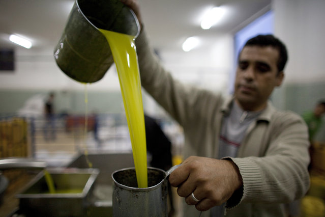 A Palestinian man pours freshly pressed olive oil during harvest season in the village of Qarawat Bani Zeid, north of the West Bank city of Ramallah October 25, 2011. (Photo by Darren Whiteside/Reuters)