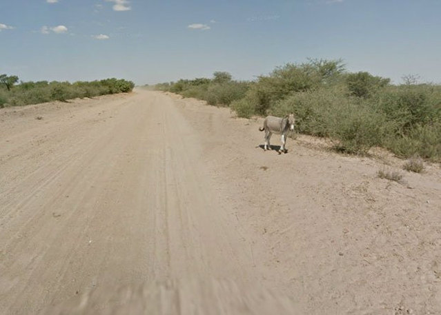 Google Street View Captures Donkey Accident