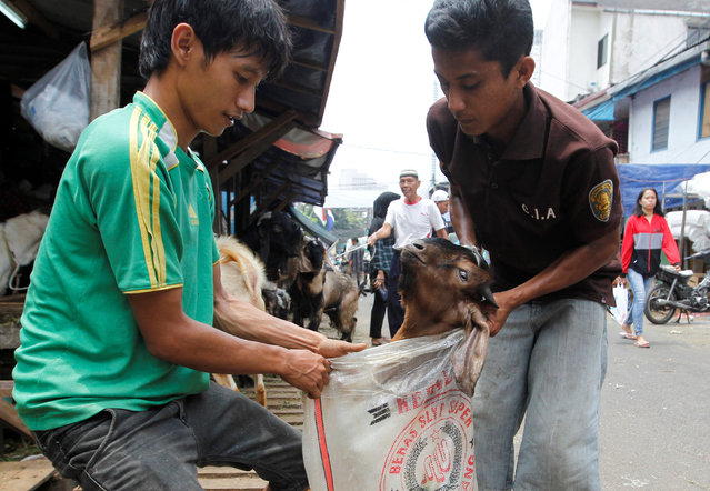 Men prepare a goat for delivery for the upcoming Muslim Eid Al-Adha holiday at a market in Jakarta, Indonesia September 11, 2016. (Photo by Iqro Rinaldi/Reuters)