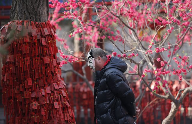 A man wearing a mask walks around a tree covered with wooden tablets bearing New Year wishes at the Daguanyuan temple during a Spring Festival Temple Fair celebrating the Chinese Lunar New Year in Beijing February 12, 2013. The Lunar New Year, or Spring Festival, began on February 10 and marked the start of the Year of the Snake, according to the Chinese zodiac.  (Photo by Kim Kyung-Hoon/Reuters)