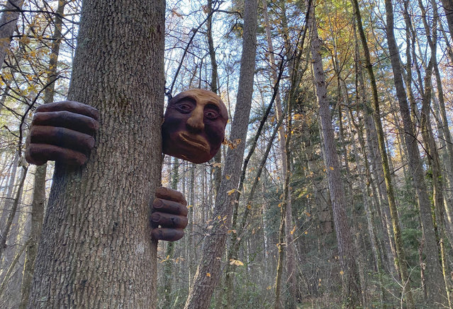 """A """"friendly giant"""" sculpture hangs from a tree in the Hanmer Heritage Forest at Hammer Springs, New Zealand, Sunday, June 14, 2020. Christchurch sculptor Andrew Lyons created the creatures out of a redwood tree that had to be removed from nearby Hanmer Springs Thermal Pools and Spa in 2018 and carved nine sculptures including big friendly giant, some enormous mushrooms, a falcon, and a dog. (Photo by Mark Baker/AP Photo)"""