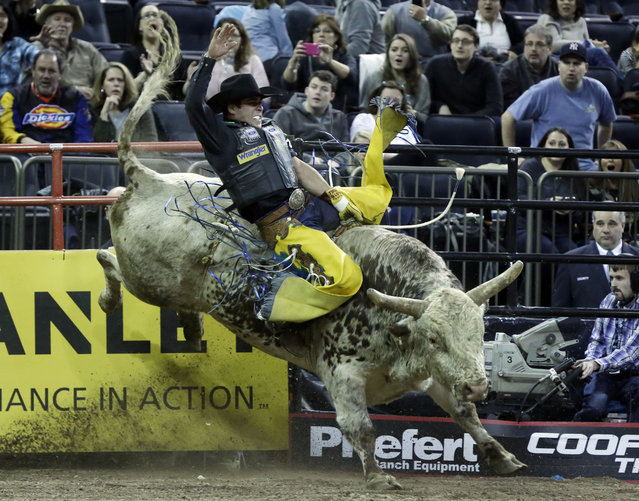 Robson Palermo, from Brazil, rides Pain & Suffering, during the Professional Bull Riders Buck Off, in New York's Madison Square Garden, Saturday, January 17, 2015. (Photo by Richard Drew/AP Photo)
