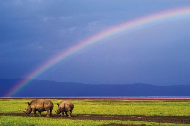 """Wild Africa"". (Photo by Alex Bernasconi)"