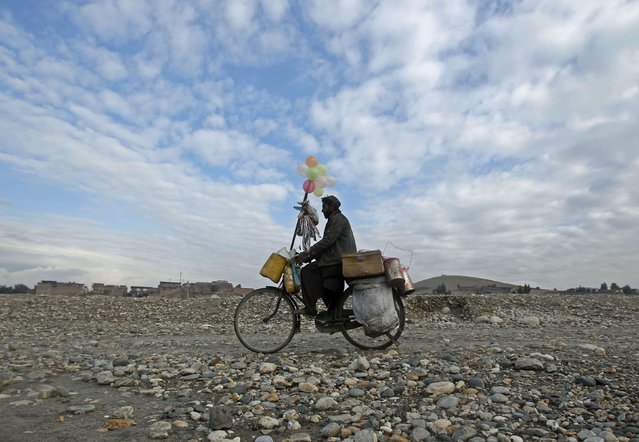 An Afghan man rides his bicycle as he sells balloon on the outskirts of Jalalabad city, January 22, 2015. (Photo by Reuters/Parwiz)