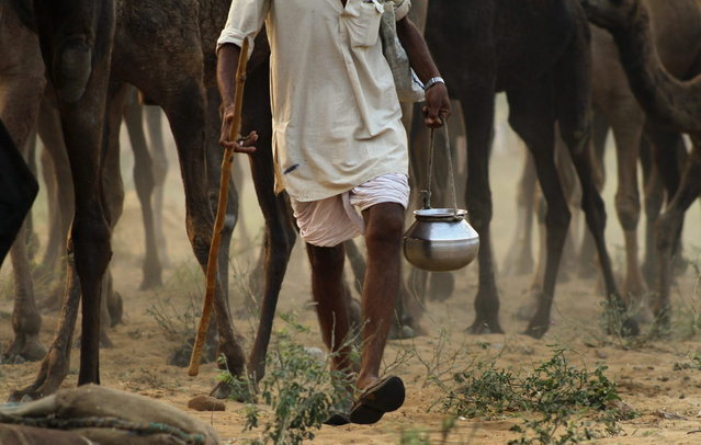 An Indian camel herder carrying his water pot arrives with his camels for the annual cattle fair in Pushkar,  Rajasthan state, India, Wednesday, November 6, 2013. (Photo by Deepak Sharma/AP Photo)
