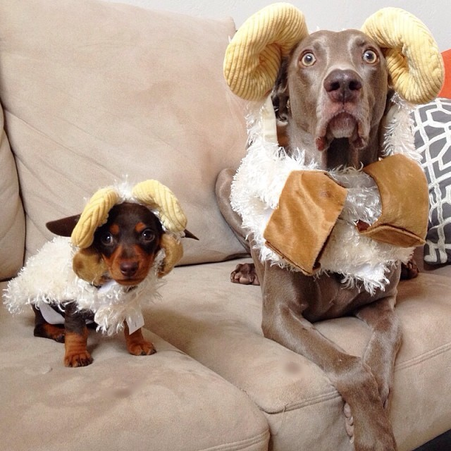 Harlow and Indy
