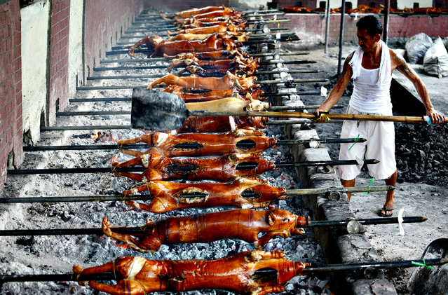 """A worker checks the coal as he roasts pigs in Manila on December 23, 2013 for the busy holiday season. """"Lechon"""", or roasted pig, has always been a regular fare at Philippine festivities, especially during Christmas and New Year celebrations. The Philippines Christmas season runs from December until the second week of January. (Photo by Noel Celisnoel Celis/AFP Photo)"""