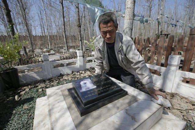 Baifu pet cemetery worker Zhang Youwang cleans the tomb of pet dog Baobao, which died at the age of 13, during his daily work ahead of the Qingming Festival on the outskirts of Beijing China, March 26, 2016. (Photo by Jason Lee/Reuters)