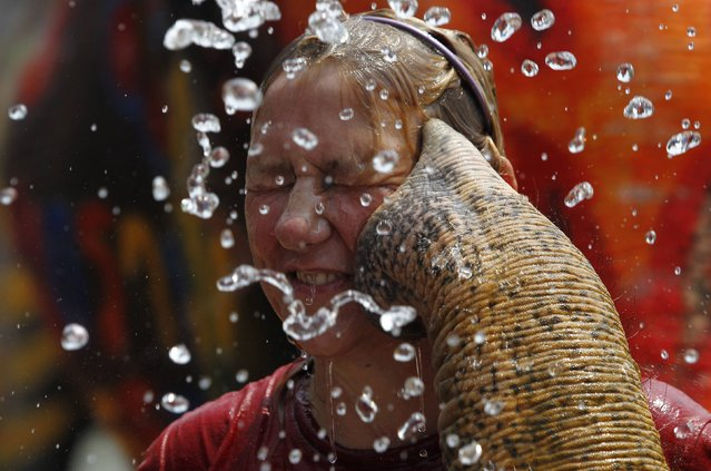 A tourist reacts as an elephant sprays her with water in celebration of the Songkran water festival in Thailand's Ayutthaya province, April 9, 2014. Songkran, the most celebrated festival of the year, marks the start of Thailand's traditional New Year. (Photo by Chaiwat Subprasom/Reuters)