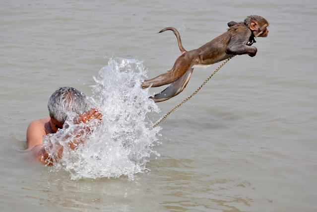 Ramu, a pet monkey, jumps as his handler bathes in the waters of the Ganges River, on a hot summer day, in Kolkata, India April 26, 2017. (Photo by Rupak De Chowdhuri/Reuters)