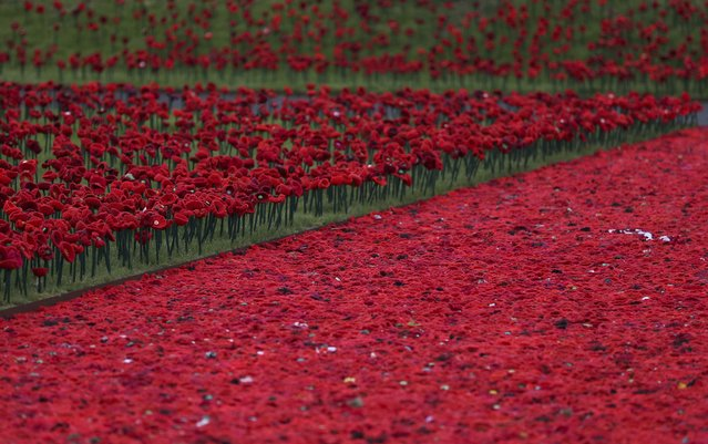 A display of fabric poppies is seen during preparations for the RHS Chelsea Flower Show in London, Britain May 21, 2016. (Photo by Neil Hall/Reuters)
