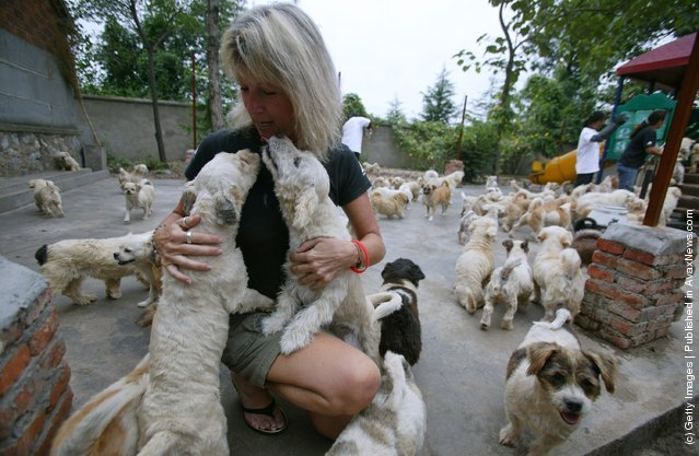 Stray dogs at the 'Ping An A Fu' (safe and happy) Homeless Animals Rescue Center in Nanjing