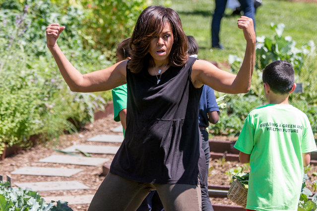 First lady Michelle Obama, joined by school children from across the country, jokingly flexes her muscles for members of the media as she harvests the White House Kitchen Garden, Monday, June 6, 2016, at the White House in Washington. (Photo by Andrew Harnik/AP Photo)