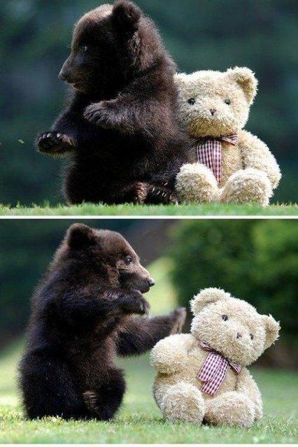 Bear cub with his teddy bear friend