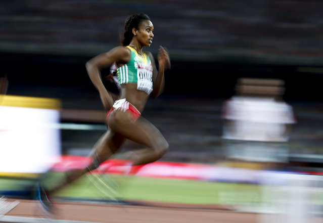 Genzebe Dibaba of Ethiopia competes in the women's 1500m semi-final during the 15th IAAF World Championships at the National Stadium in Beijing, China August 23, 2015. (Photo by Lucy Nicholson/Reuters)