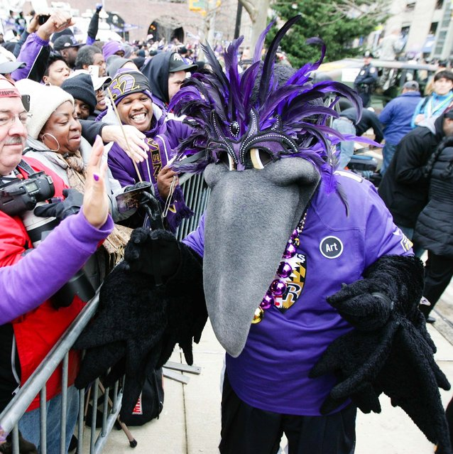 Baltimore Ravens mascot Poe cheers with fans during the Baltimore Ravens victory parade and celebration for Super Bowl XLVII, 02-15-13. (Photo by Maxwell Kruger/USA TODAY Sports)