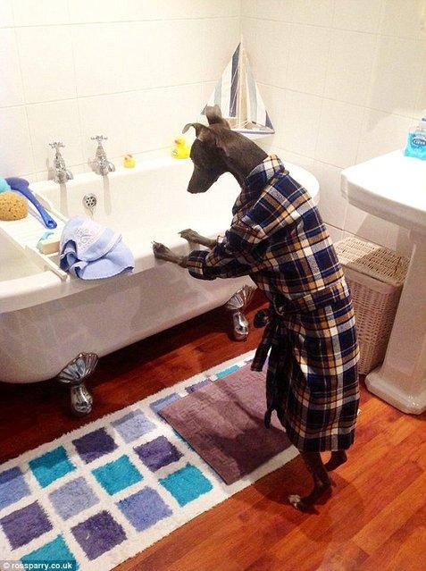 The Dog Who Thinks He's A Human