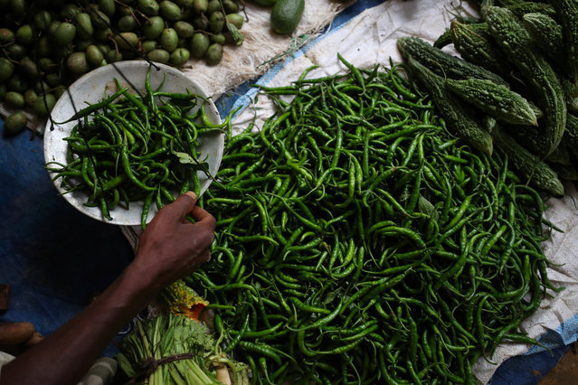 "Rohingya refugee and trader Abul Fayaj, 50, weighs green chillies at a stall in Palong Khali refugee camp near Cox's Bazar, Bangladesh, October 29, 2017. He said a Bangladeshi lent him money for the chillies, which he sells for 200 taka ($2.39) per kg, higher than the local market price of 130 taka per kg. ""I don't have the money to take lots of food, that's why I have to take a loan"", he said. ""I have to pay more to the lender who gave me the money to buy the vegetables, so there is only a small profit"", said Fayaj, adding he takes home 100 taka a day (1 Bangladeshi Taka = 0.012 US Dollar). (Photo by Hannah McKay/Reuters)"
