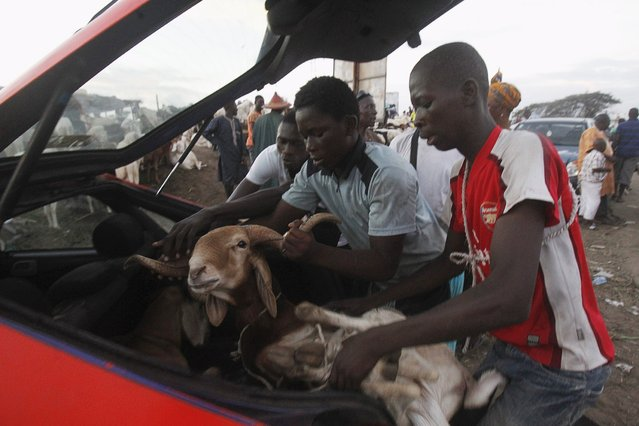 Men load a sheep into a car at a sheep market two days ahead of Eid al-Adha, in Port Bouet, Abidjan, Ivory Coast September 22, 2015. (Photo by Luc Gnago/Reuters)