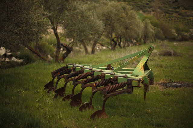 A plow is seen next to olive trees in a field in the outskirts of Cuevas del Becerro, near Malaga, April 9, 2014. (Photo by Jon Nazca/Reuters)