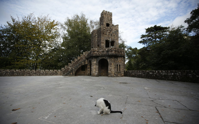 A cat cleans itself near the cistern at Quinta da Regaleira in Sintra October 6, 2014. (Photo by Rafael Marchante/Reuters)