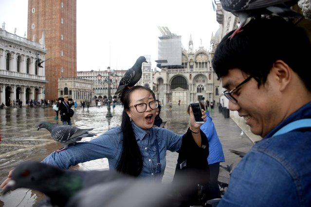 Tourists pose with pigeons in the flooded St. Mark's Square in Venice, on November 7, 2014. The high water, a combination of high tides and a strong Scirocco wind in the Adriatic Sea, stood at 110 centimeters early on November 7. The city has for years been wrestling with the problems posed by the threat of rising sea levels. (Photo by Olivier Morin/AFP Photo)
