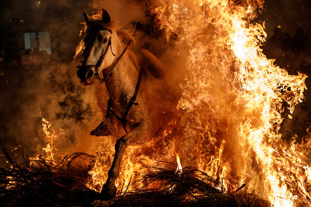 """A man rides a horse through flames during the annual """"Luminarias"""" celebration on the eve of Saint Anthony's day, Spain's patron saint of animals, in the village of San Bartolome de Pinares, northwest of Madrid, Spain, January 16, 2018. (Photo by Juan Medina/Reuters)"""