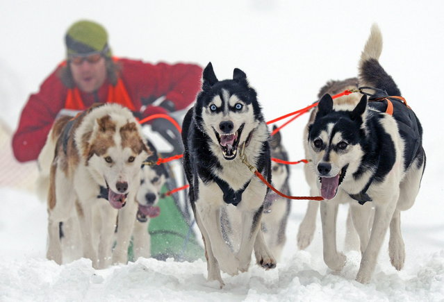 Musher Michael Ruopp of Germany starts with his sled dogs at the 23rd International Sled Dog Race in Oberhof, central Germany, Sunday, February 24, 2013.  (Photo by Jens Meyer/AP Photo)