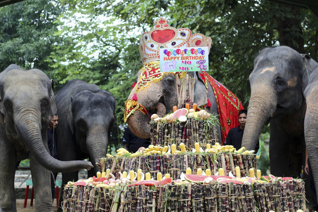 Female elephant Mo Mo, second right, eats a cake made of fruits, vegetables and sugar canes with her friends during a ceremony to mark her 62nd birthday at the Yangon Zoological Gardens Sunday, October 18, 2015 in Yangon, Myanmar. The pachyderm originally from Myanmar's eastern Kayah state was brought to the zoo in 1961 when she was seven-year-old. (Photo by Khin Maung Win/AP Photo)