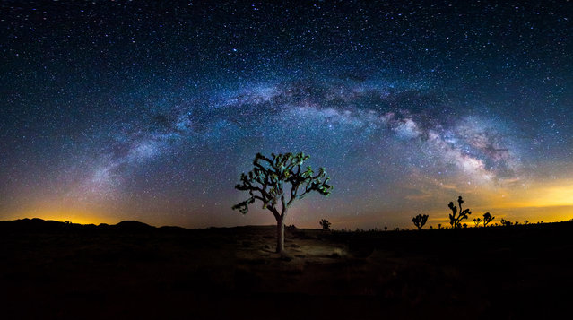 """The Wisdom Tree"". Milky way rising over the Joshua Tree in Joshua Tree National park, Calif. (Photo and caption by Manish Mamtani/National Geographic Traveler Photo Contest)"