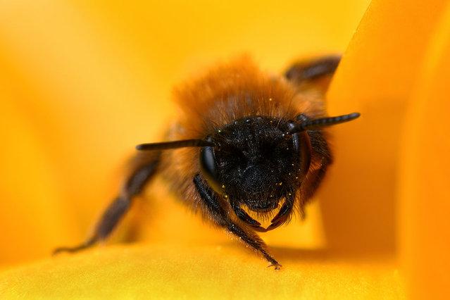 Bee. (Photo by Boris Godfroid)