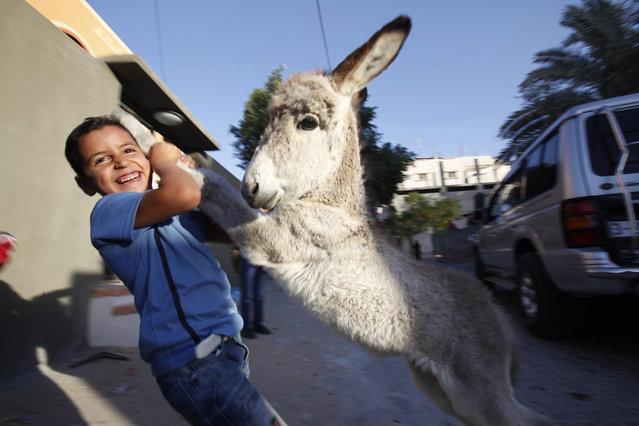 A Palestinian Laith Al-Aklok, 6, plays with a donkey foal belonging to his family in Deir Al Balah, central Gaza Strip, Tuesday, October 8, 2013. (Photo by Adel Hana/AP Photo)