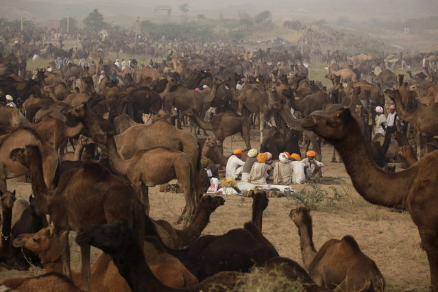 Indian camel herders sit near their camels during the annual cattle fair in Pushkar, in the western Indian state of Rajasthan,  Sunday, November 10, 2013. (Photo by Ajit Solanki/AP Photo)
