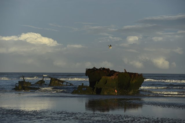 A seabird flies past shipwreck MV Plassy on Baltray beach in Louth, Ireland December 15, 2016. (Photo by Clodagh Kilcoyne/Reuters)