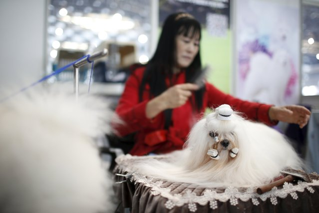 A dog groomer combs a dog's fur during the Shanghai International Pet Expo in Shanghai, China, March 17, 2016. (Photo by Aly Song/Reuters)