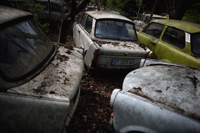 A picture made available on 23 March 2016 shows part of Trabant cars collection of Ivailo Antov in the village of Hotnica some 200km from Sofia, Bulgaria, 22 March 2016. Antov is aspiring for a Guinness World Record for the largest collection of Trabant cars, a brand of the former German Democratic Republic, very common on the roads of the Communist Block. Ivailo Antov, has a collection of 70 cars stored in the yard of his house. He explains, that every car has a sentimental value for its ex-owners, which preferred to hand it over to him instead to throwing it away. (Photo by Vassil Donev/EPA)