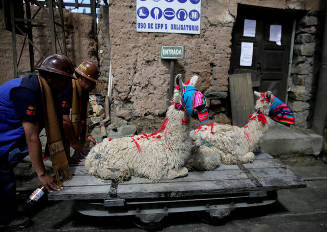 Independent miners transport llamas to sacrifice them for good fortune during the year as part of Andean carnival celebrations, outside the Mina Itos on the outskirts of Oruro, Bolivia February 24, 2017. (Photo by David Mercado/Reuters)