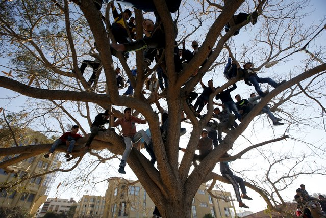 Palestinians climb over a tree as they watch a cultural carnival organized by Gaza Municipality in Gaza City April 1, 2016. (Photo by Mohammed Salem/Reuters)