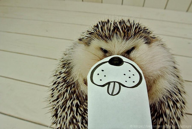 Marutaro The Hedgehog Part 1