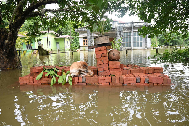 A dog rests on higher ground as it is surrounded by floodwaters in Shwegyin township, Bago Region on August 8, 2019. Raging monsoon flooding across Myanmar has forced tens of thousands of people from their homes in recent weeks, officals said on August 8, as seasonal rains pummel the nation. (Photo by Ye Aung Thu/AFP Photo)