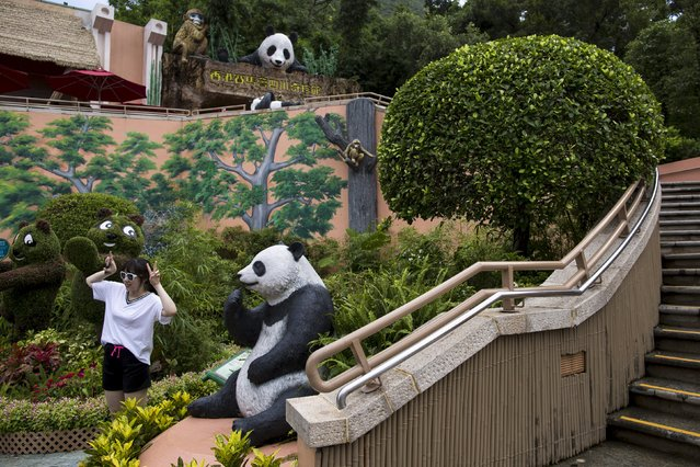 A visitor poses in front of a giant panda habitat at the Hong Kong Ocean Park, China June 25, 2015. (Photo by Tyrone Siu/Reuters)