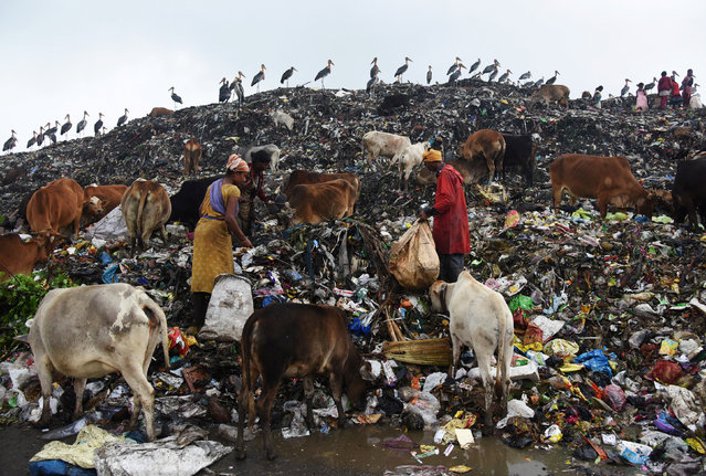 Scavengers collect recyclable materials at a garbage dump site on the occasion of Earth Day, in Guwahati, India, April 22, 2017. (Photo by Anuwar Hazarika/Reuters)