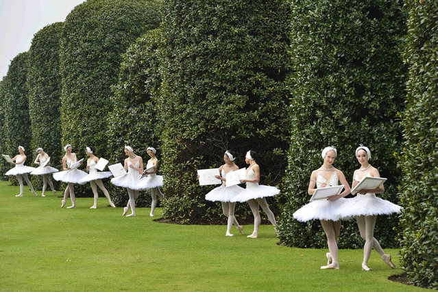 Members of the English National Ballet pose outside The Orangery restaurant at Kensington Palace in London May 22, 2012, as part of a publicity event for a summer charity fundraiser with Swan Lake as the theme