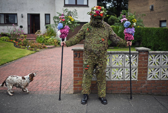 Burryman Andrew Taylor meets resident as he parades through the town encased in burrs on August 11, 2017 in South Queensferry, Scotland. The parade takes place on the second Friday of August each year and although the exact meaning of this tradition has been lost through the years though it is thought to have begun in the Seventeenth century. The tradition is believed to bring good luck to the towns people if they give him whisky offered through a straw or a donation of money. (Photo by Jeff J Mitchell/Getty Images)