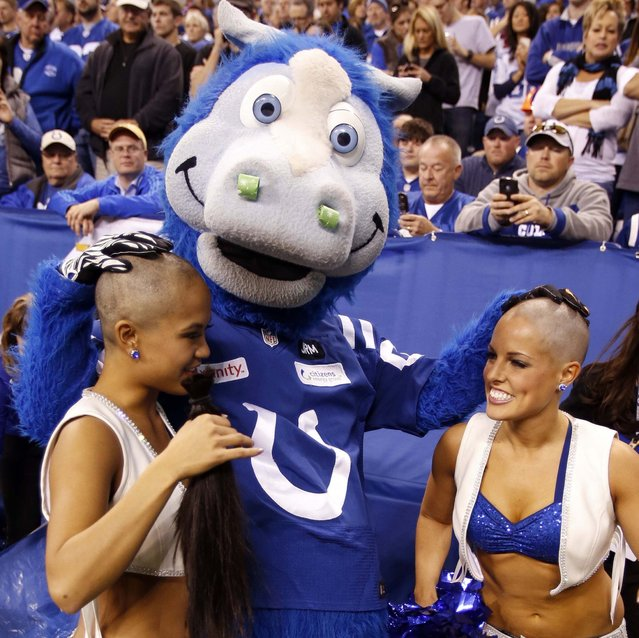 Indianapolis Colts cheerleaders Crystal Ann, left, and Megan get their heads shaved by Colts mascot during a game against the Buffalo Bills at Lucas Oil Stadium, 2012-11-25. The cheerleaders raised over $22,670 for cancer research in support of Colts coach Chuck Pagano who has leukemia. (Photo by Brian Spurlock/US Presswire)